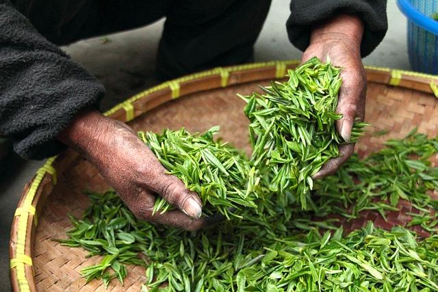 Benefícios do chá verde para a saúde bucal